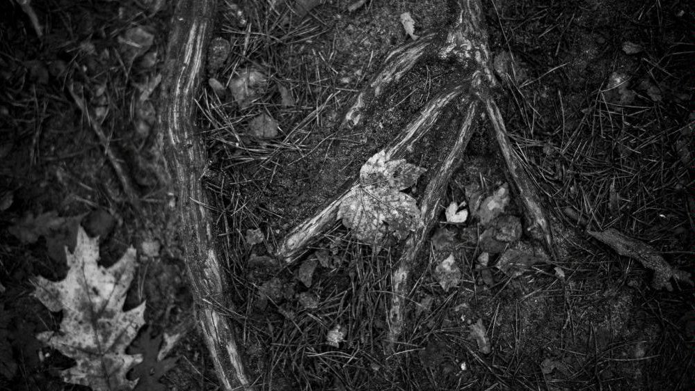 Black and white photo of a ground with fallen leaves and tree roots - grafika artykułu
