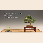 plakat z bonsai